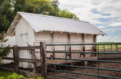 C-Mor Beef Farm