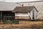 C-Mor Beef Farm by Benjamin Halpern