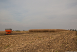 Farley Ear Corn Festival Harvest