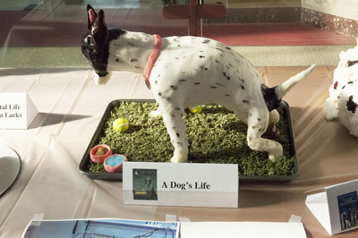 Award Winner: People's Choice Gold Medal: A Dog's Life