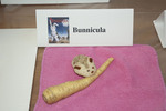 Honorable Mention: Bunnicula by Stacey Knight-Davis