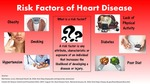 Risk Factors for Heart Disease Infographic by Allison Koch