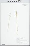 Corallorhiza odontorhiza Nutt. by Gordon C. Tucker and Aquatic Plants Class