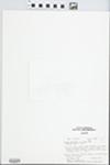 Limnia depressa by Paul D. Sorensen and Penny A. Matekitis