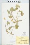 Viola pratincola Greene by Hiram F. Thut and J. T. McGinnis