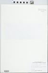 Androsace occidentalis Pursh by John E. Ebinger