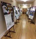 """""""Designs of Duty"""" at Newman Regional Library by Andrew Cougill"""